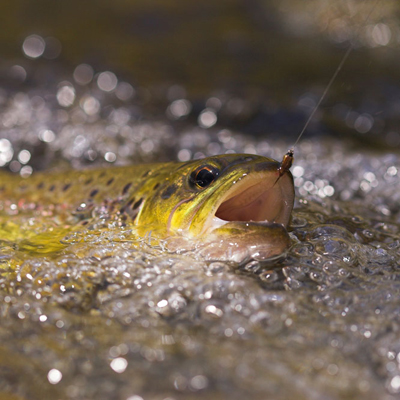 Fish For Trout with Worms