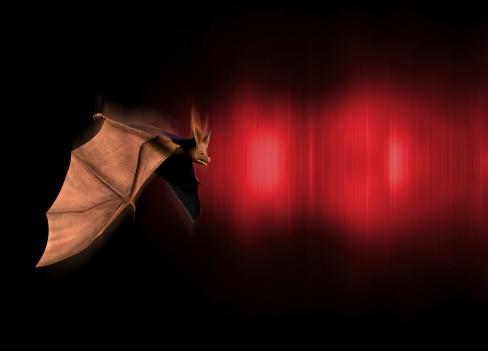 Bats in a Garage
