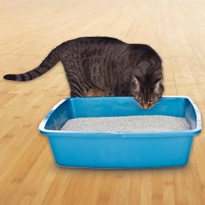 where to buy cat urine