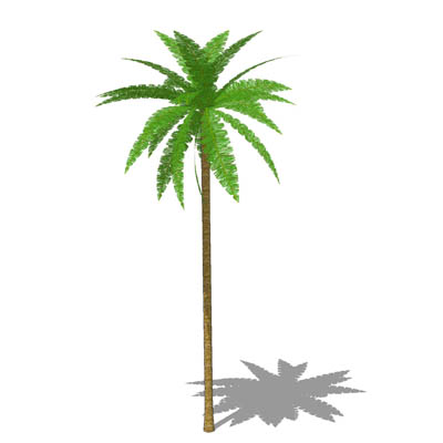 Grow a Coconut Tree from a Seed