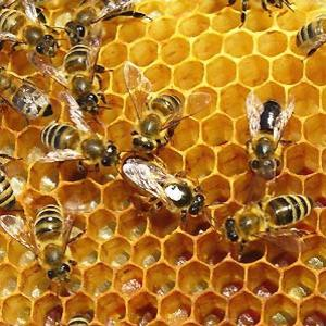 Keep Bees from Bothering You