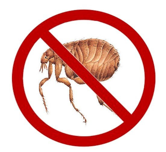 tips to Keep Fleas Off Of People