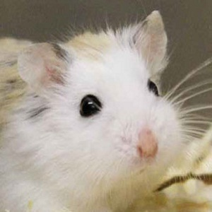 Hamsters Cool in the Summer