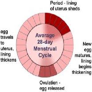 Make Periods Shorter Naturally
