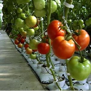 Tips to Make a Small Hydroponic Garden