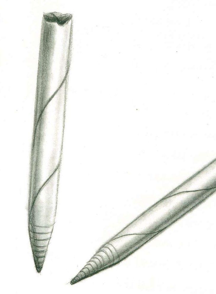 Tortillon Stick