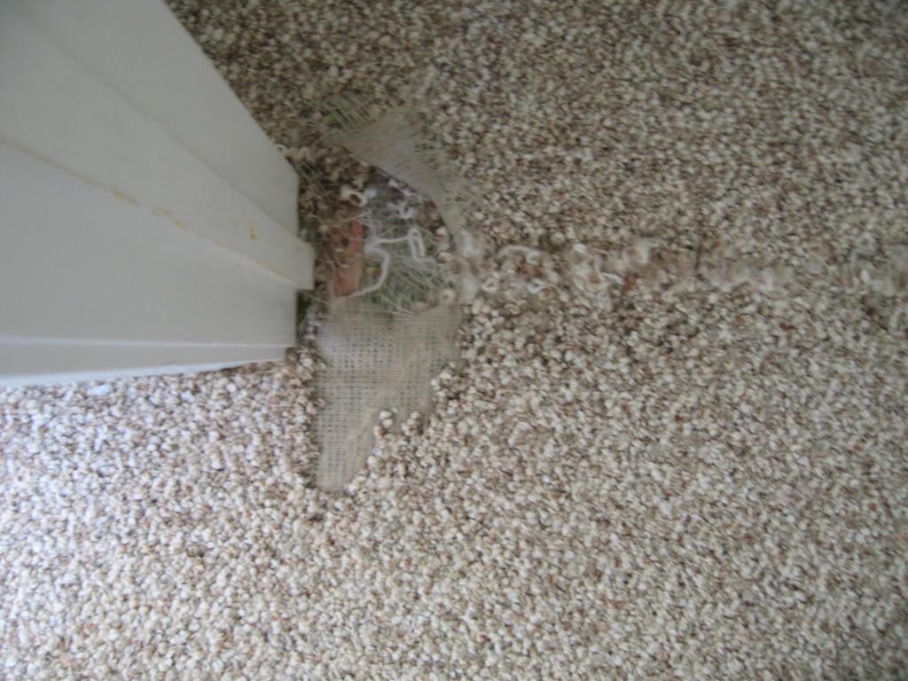 A damaged carpet area