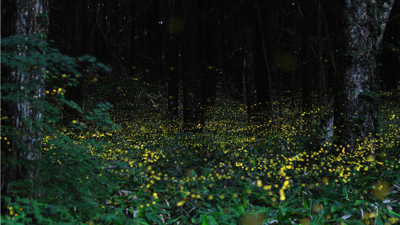 Photograph Fireflies at Night