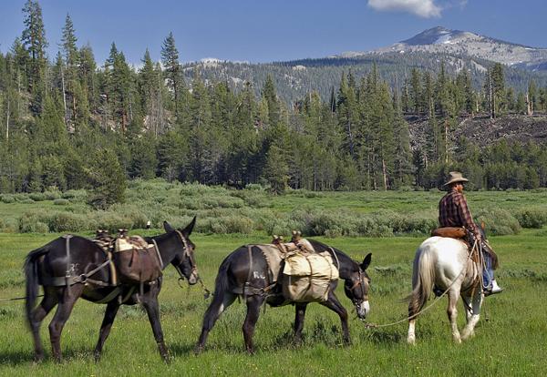 Plan a Sierra Horse Pack Trip