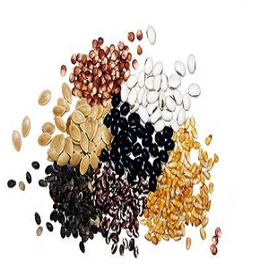 How to Save Fruit Seeds for Gardening
