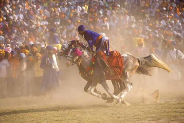 Horse Racing Shot