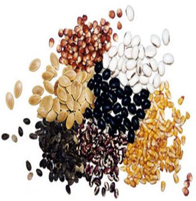 Store Garden Seeds