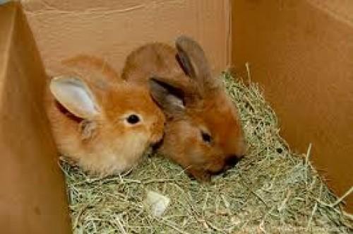 Rabbit Hatch