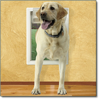 Puppy Use the Doggy Door