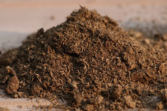 How to Use Peat Moss in Filter