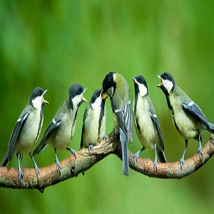 Attract Birds to Your Garden