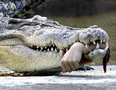tips to Avoid Getting Attacked By Wild Animals