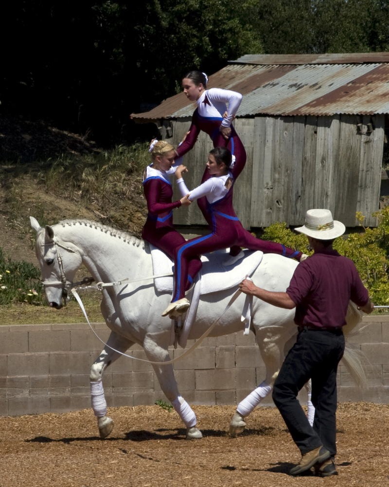 Vaulting on Horseback