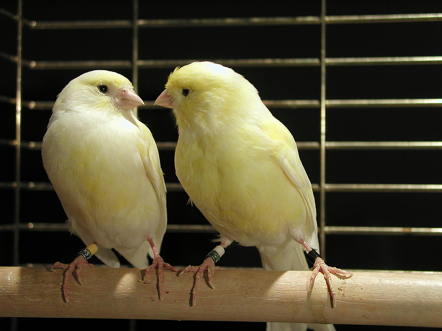Canaries in Cages