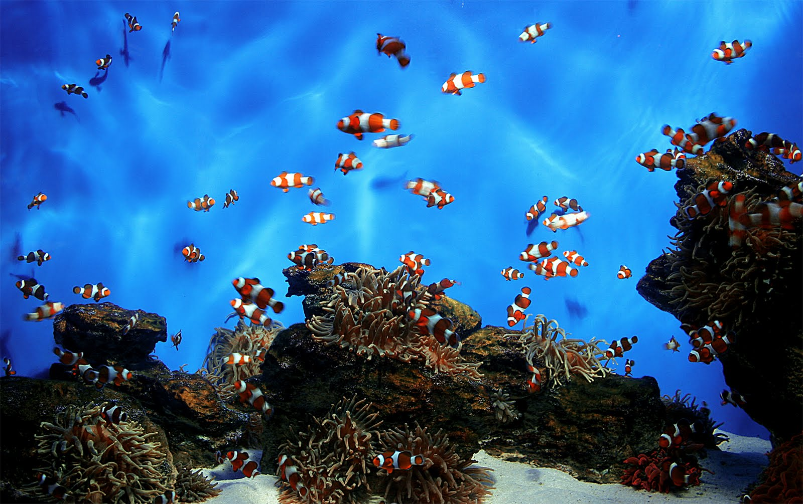 Breed Saltwater Fish