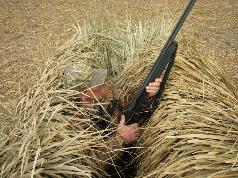 Goose Blind Out of Corn Stalks
