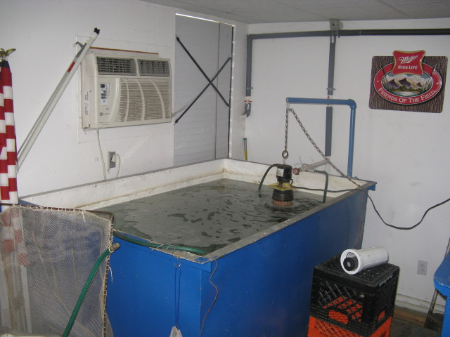 A large minnow tank