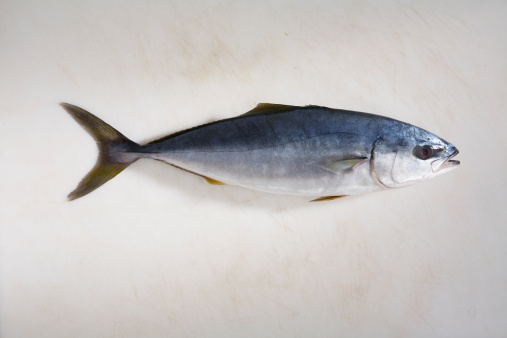 How to Catch Tuna from Shore