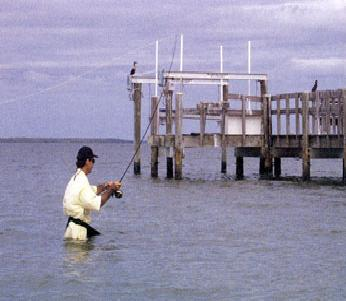 Tips to Catch a Snook on a Fly Rod