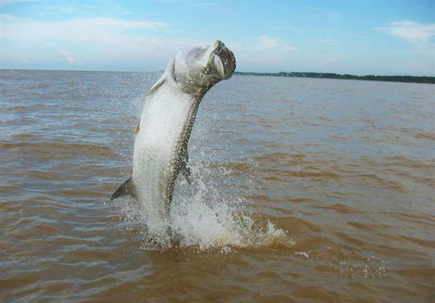 Tips to Catch a Tarpon on a Fly Rod