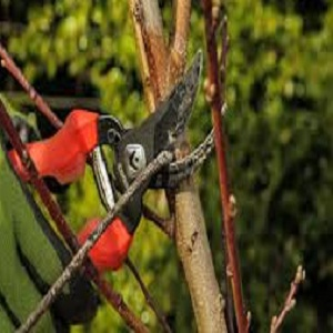 Clean Corona Pruning Tools