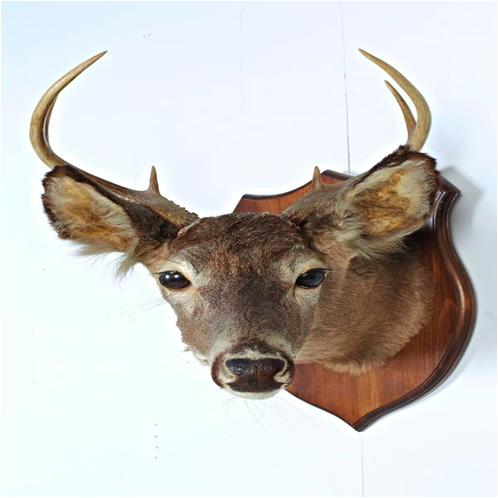 Old Deer Mount