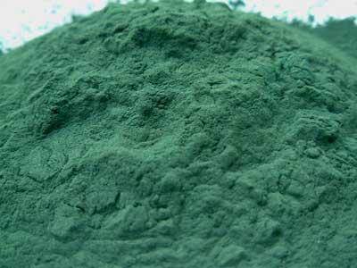 Using Blue Green Algae