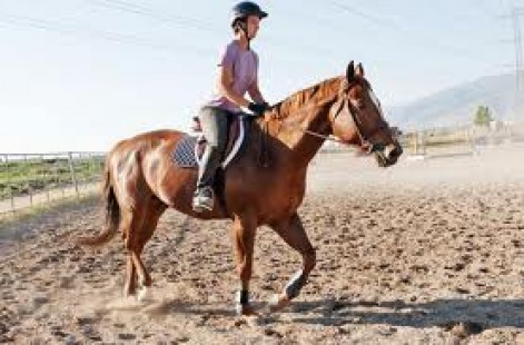 Posting Trot on a Horse