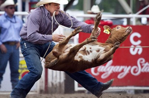 A rider tying a calf