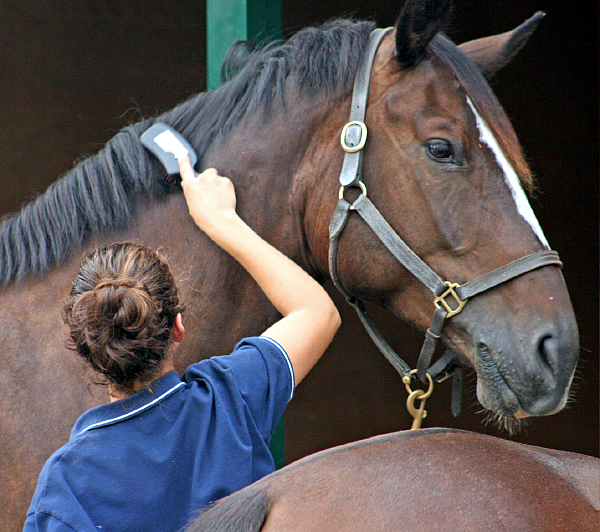 how to groom a horse pdf