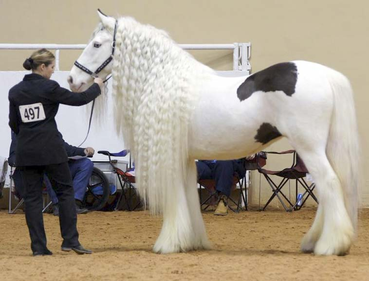 Groom Your Horse for an English Show