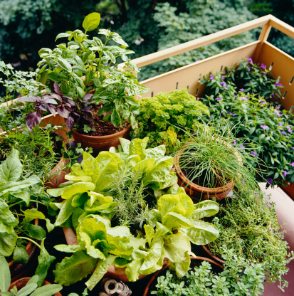 Tips about How to Grow Herbs for Profit at Home