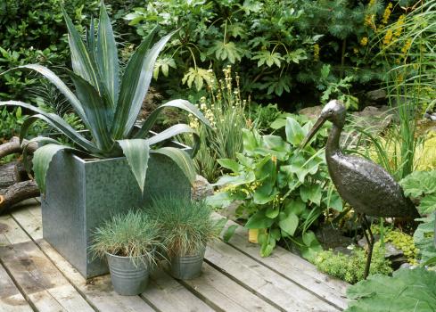 Landscape Plants & Fescue