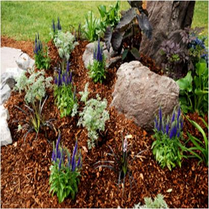 Apply Mulch On Your Garden