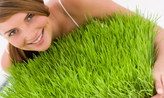 Maintain a Wheatgrass Garden