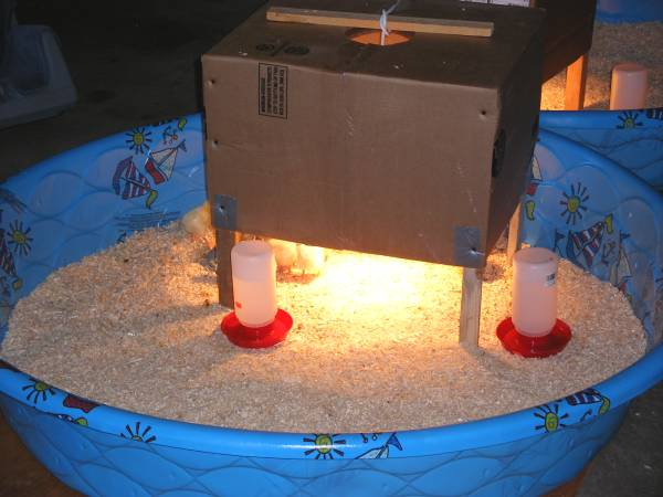 Tips about How to Make a Chicken Brooder