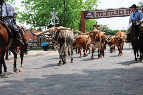 Day Trip to the Fort Worth Stockyards