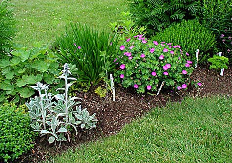 How to Plant a Small Herb Garden in Your Lawn
