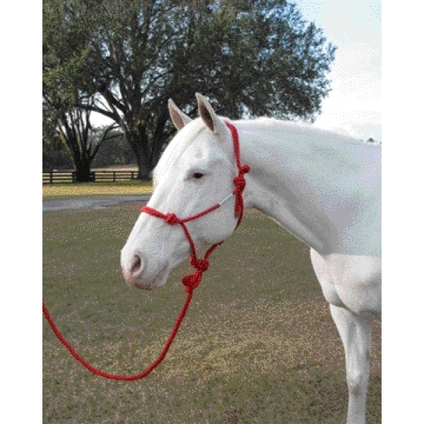 Tips about How to Put on a Rope Halter