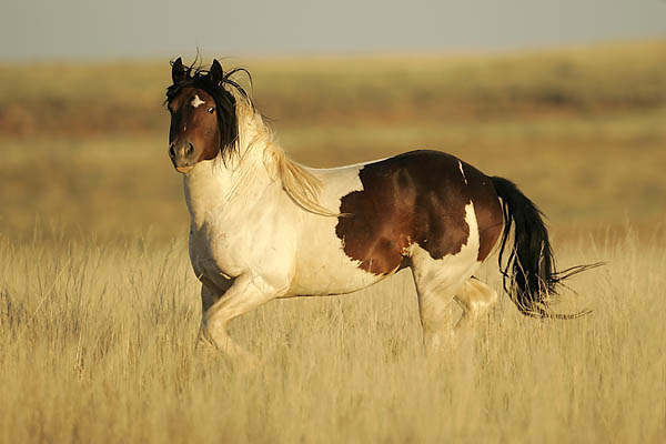 How to Softly Break a Wild Horse