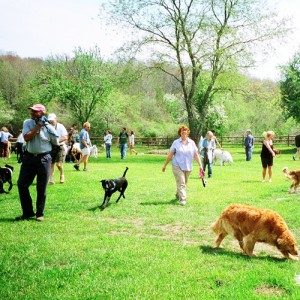 How to Start a Dog Park in Your Town