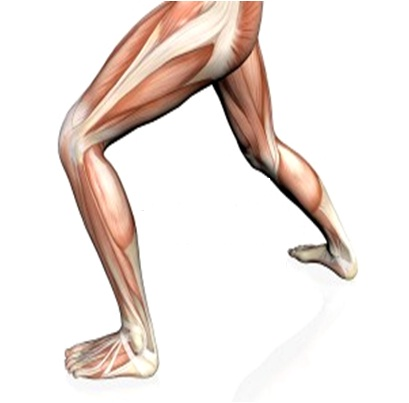 Strengthen Knee Muscles After Knee Replacement
