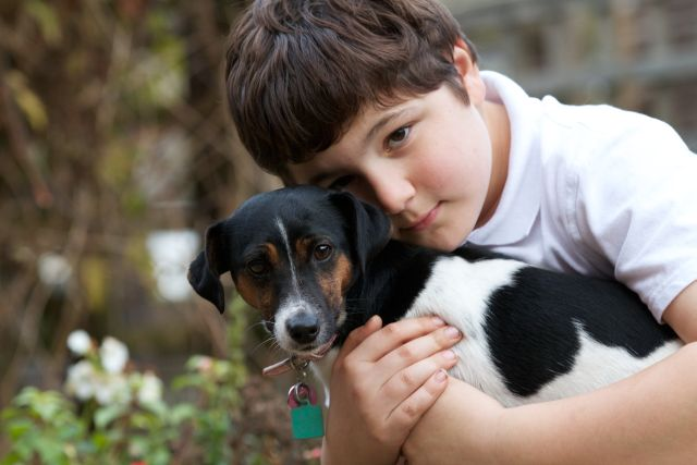How to Train Dogs for Family Living & Work
