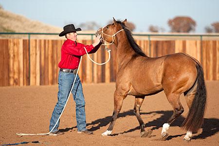 Training a Horse