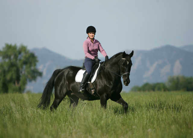 Train a Horse to Canter
